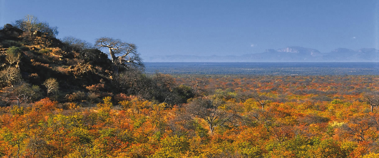 Bushveld Vista - Limpopo-Lipadi Private Game Reserve, Botswana