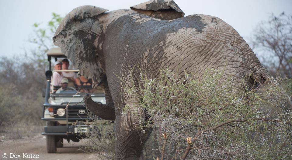 Elephant encounter - Limpopo-Lipadi Private Game Reserve, Botswana